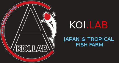 koilab japan and tropical fish farm